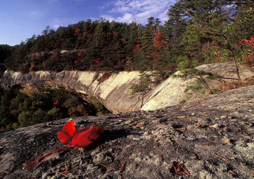 Red Leaf on Clifftop