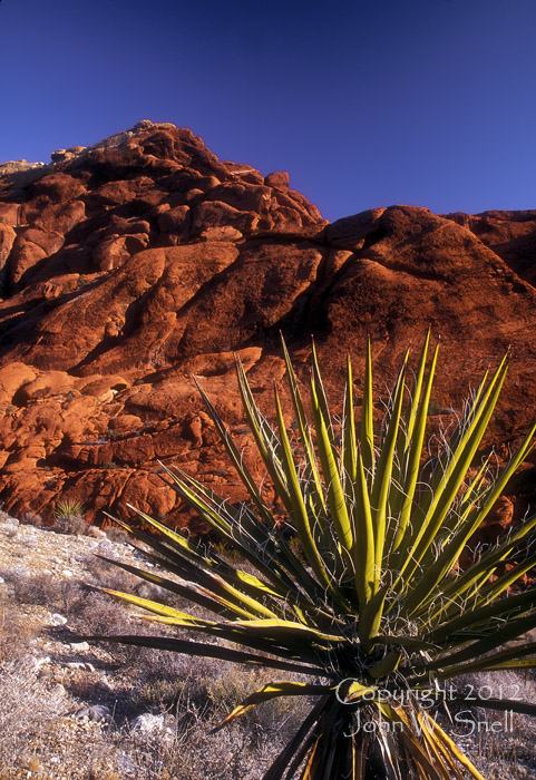 John Snell Photography - Yucca Plant, Red Rock Canyon, Nevada